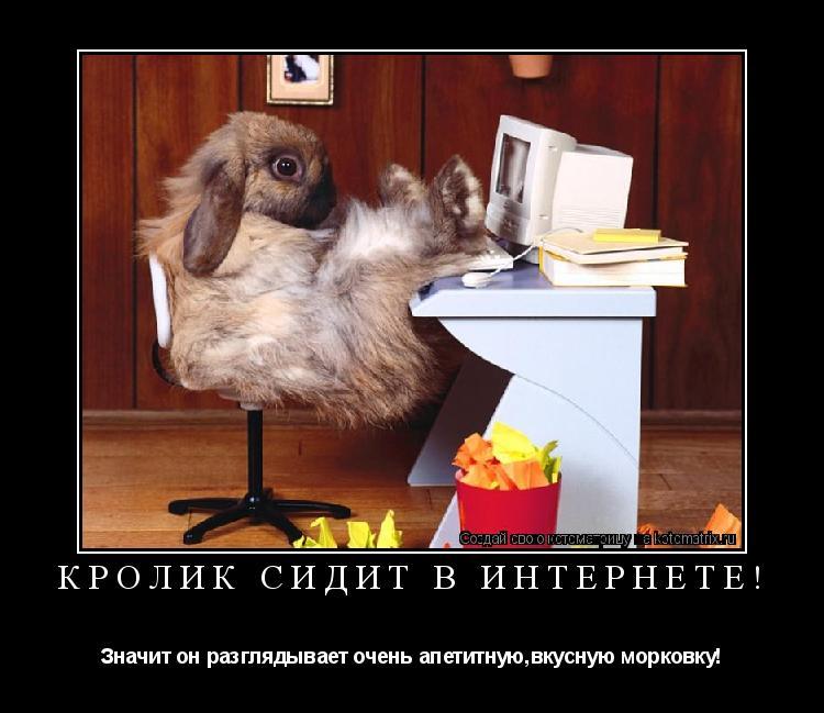 Котоматрица: Кролик сидит в интернете! Значит он разглядывает очень апетитную,вкусную морковку!