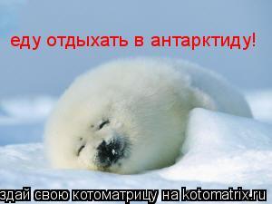 Котоматрица: еду отдыхать в антарктиду!