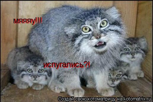 Котоматрица: мяяяу!!! испугались?! испугались?! мяяяу!!!