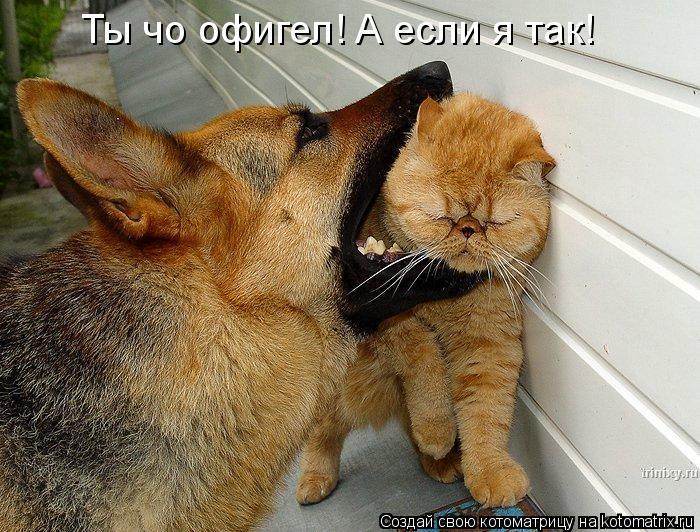 Котоматрица: Ты чо офигел! А если я так!