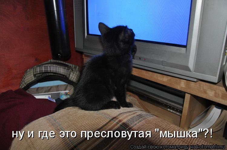"""Котоматрица: ну и где это пресловутая """"мышка""""?!"""