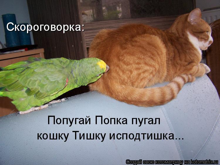 Котоматрица: Скороговорка: Попугай Попка пугал кошку Тишку исподтишка...