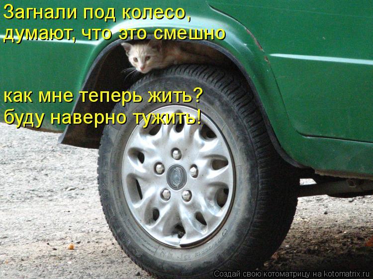 Котоматрица: Загнали под колесо,  думают, что это смешно как мне теперь жить? буду наверно тужить!
