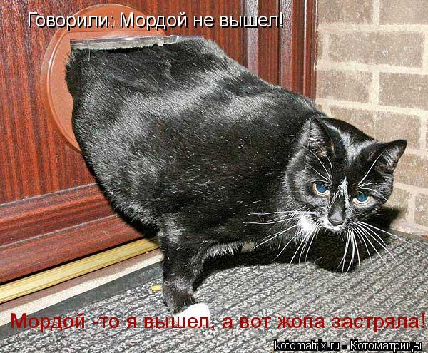 Котоматрица: Говорили: Мордой не вышел! Мордой -то я вышел, а вот жопа застряла!