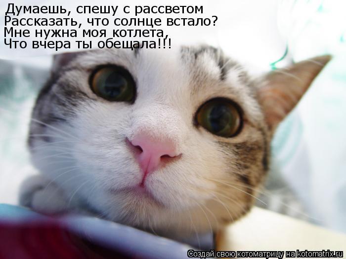 Котоматрица: Думаешь, спешу с рассветом Рассказать, что солнце встало? Мне нужна моя котлета, Что вчера ты обещала!!!