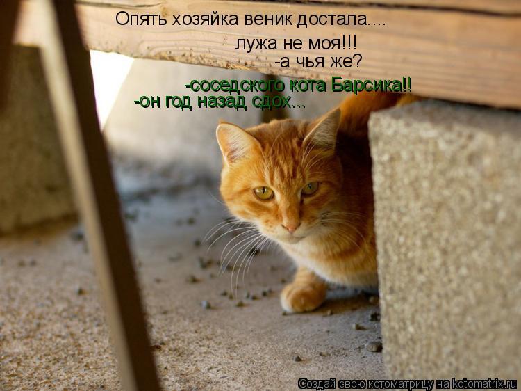 Котоматрица: Опять хозяйка веник достала.... лужа не моя!!! -а чья же? -соседского кота Барсика!! -он год назад сдох...