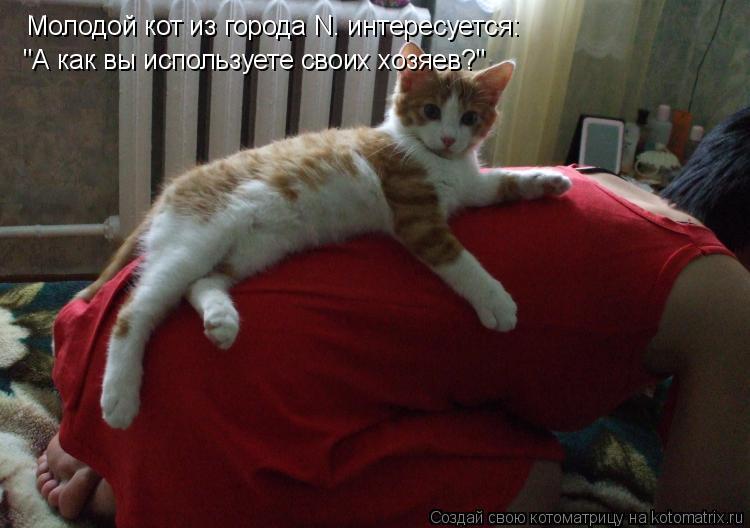 """Котоматрица: Молодой кот из города N. интересуется: """"А как вы используете своих хозяев?"""""""