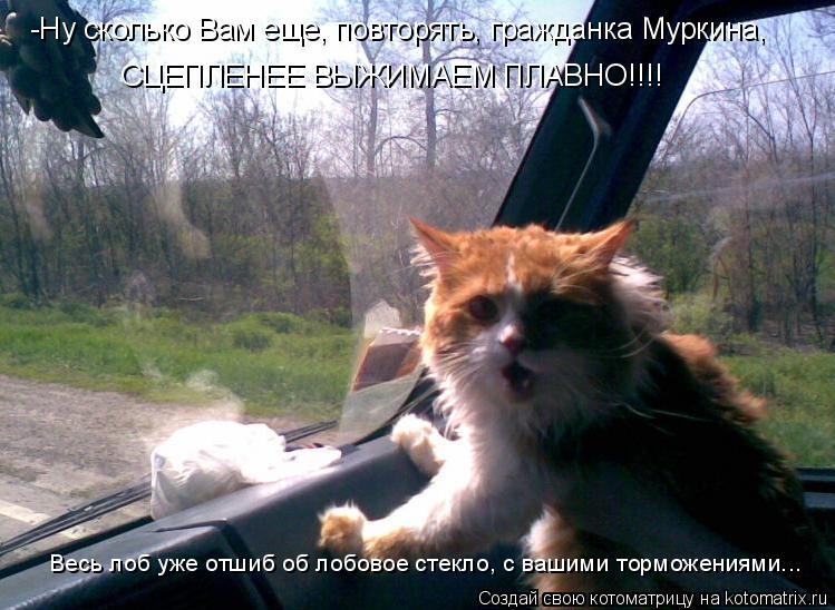 Котоматрица: -Ну сколько Вам еще, повторять, гражданка Муркина,  Весь лоб уже отшиб об лобовое стекло, с вашими торможениями... СЦЕПЛЕНЕЕ ВЫЖИМАЕМ ПЛАВНО!!!