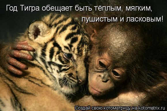 Котоматрица: Год Тигра обещает быть тёплым, мягким,  пушистым и ласковым!