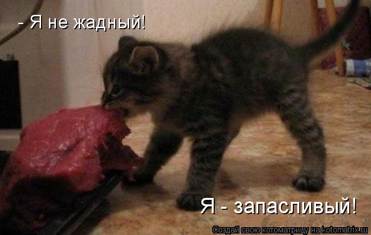 Котоматрица: - Я не жадный! Я - запасливый!