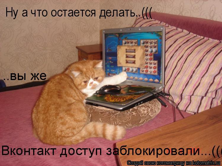 Котоматрица: Ну а что остается делать..((( ..вы же  Вконтакт доступ заблокировали...(((
