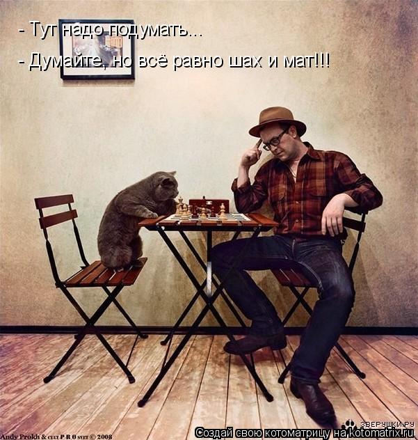 Котоматрица: - Тут надо подумать... - Думайте, но всё равно шах и мат!!!