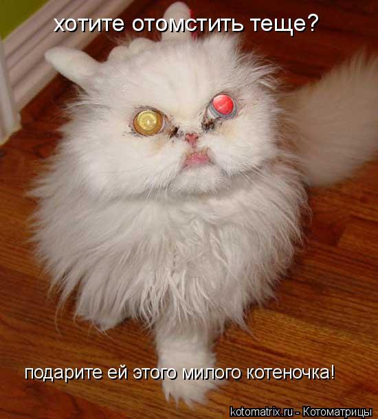 Котоматрица: хотите отомстить теще? подарите ей этого милого котеночка!