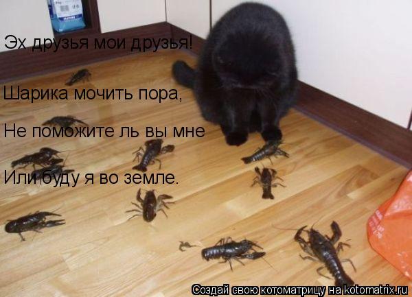 Котоматрица: Эх друзья мои друзья! Шарика мочить пора, Не поможите ль вы мне Или буду я во земле.