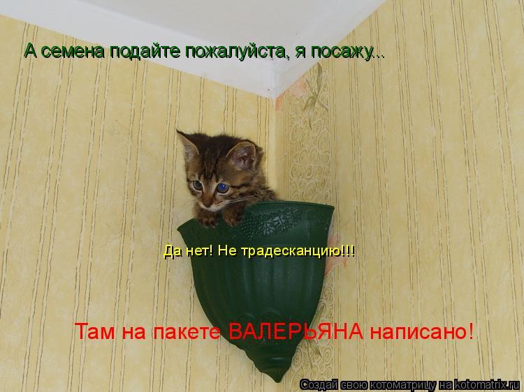 Котоматрица: А семена подайте пожалуйста, я посажу... Да нет! Не традесканцию!!! Там на пакете ВАЛЕРЬЯНА написано!