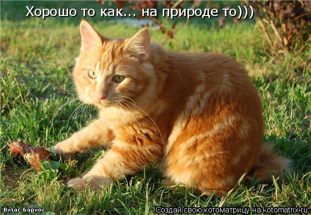 Котоматрица: Хорошо то как... на природе то)))