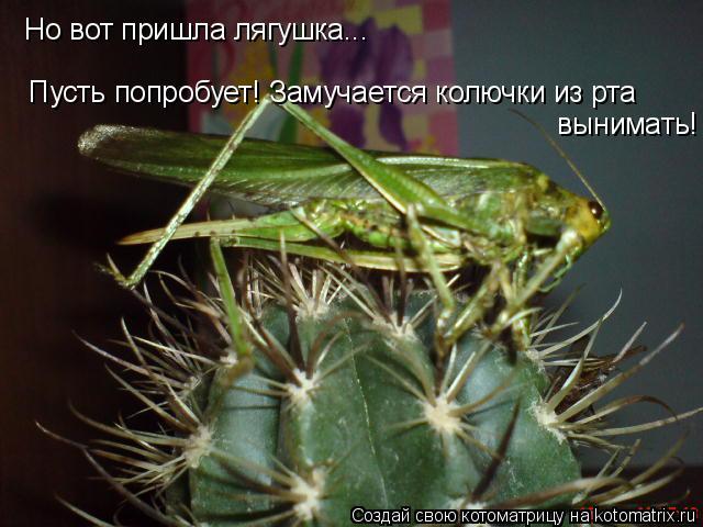Котоматрица: Но вот пришла лягушка... Пусть попробует! Замучается колючки из рта  вынимать!