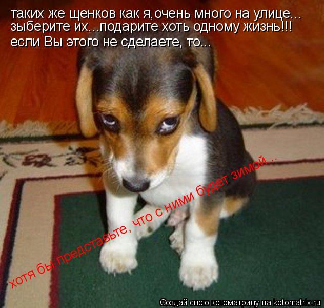 Котоматрица: таких же щенков как я,очень много на улице... зыберите их...подарите хоть одному жизнь!!! если Вы этого не сделаете, то... хотя бы представьте, чт