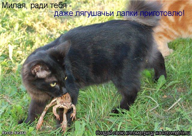 Котоматрица: Милая, ради тебя -  даже лягушачьи лапки приготовлю!