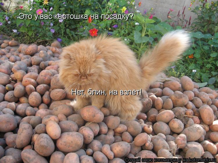 Котоматрица: Это у вас картошка на посадку? Нет, блин, на взлёт!