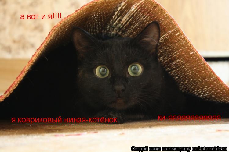 Котоматрица: я ковриковый нинзя-котёнок ки-яяяяяяяяяяяя а вот и я!!!!