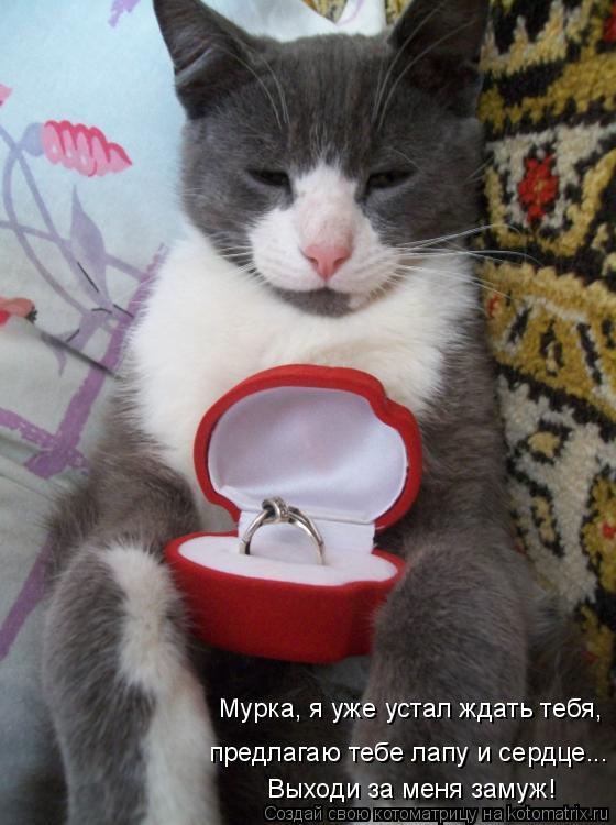 Котоматрица: Мурка, я уже устал ждать тебя, Выходи за меня замуж! предлагаю тебе лапу и сердце...