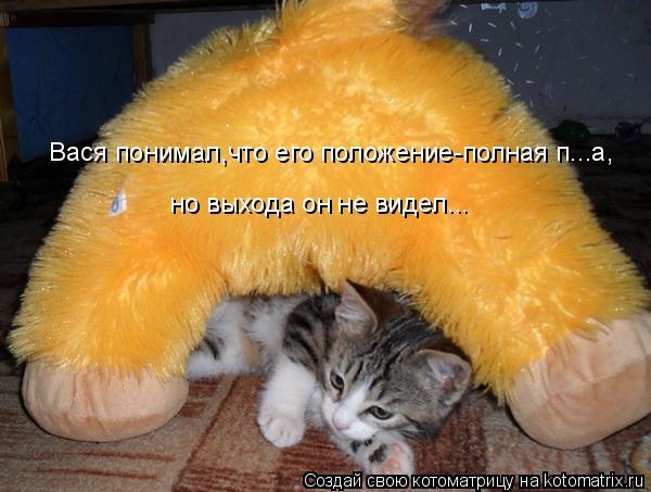 Котоматрица: Вася понимал,что его положение-полная п...а, но выхода он не видел...