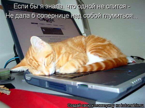 Котоматрица: Если бы я знала, что одной не спится - Не дала б сопернице над собой глумиться...