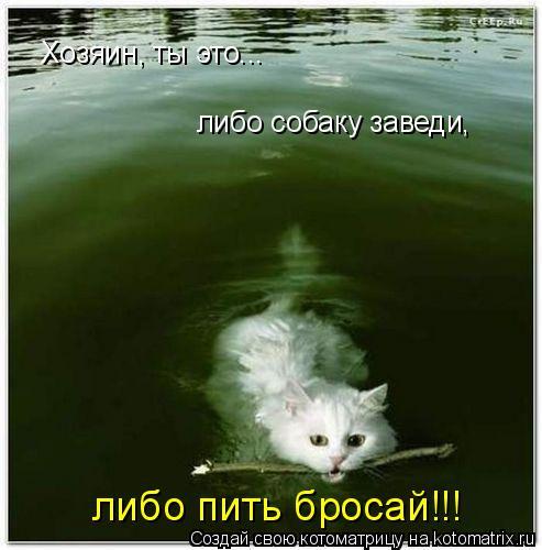 Котоматрица: Хозяин, ты это...  либо собаку заведи, либо пить бросай!!!