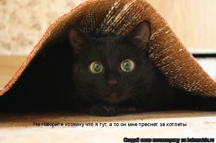 Котоматрица: Не говорите хозяину что я тут, а то он мне треснет за котлеты
