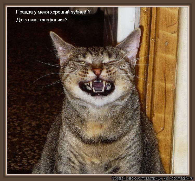 Котоматрица: Правда у меня хороший зубной!? Дать вам телефончик?