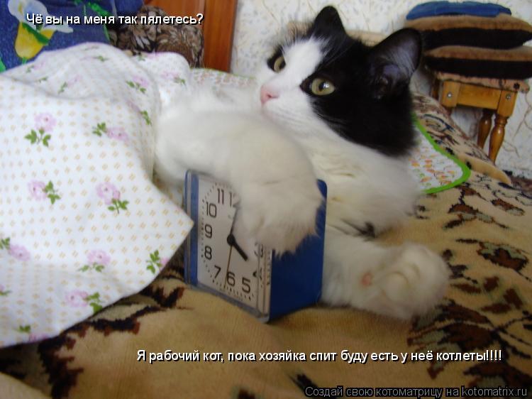Котоматрица: Чё вы на меня так пялетесь? Я рабочий кот, пока хозяйка спит буду есть у неё котлеты!!!!