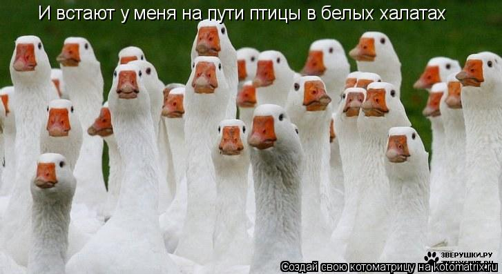 Котоматрица: И встают у меня на пути птицы в белых халатах