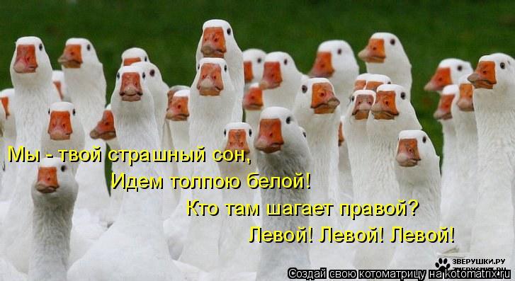 Котоматрица: Мы - твой страшный сон, Идем толпою белой! Кто там шагает правой? Левой! Левой! Левой!