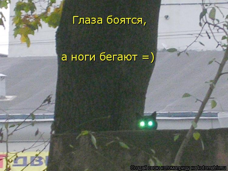 Котоматрица: Глаза боятся,  а ноги бегают =)