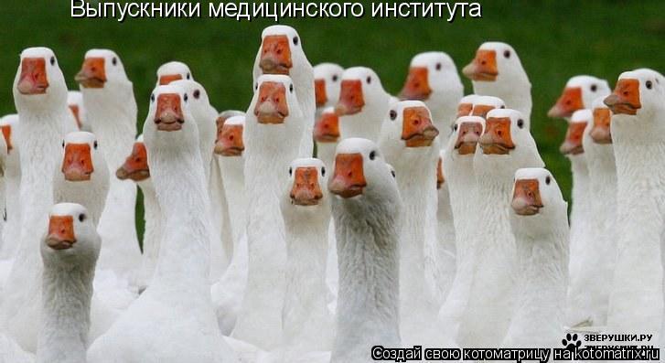 Котоматрица: Выпускники медицинского института