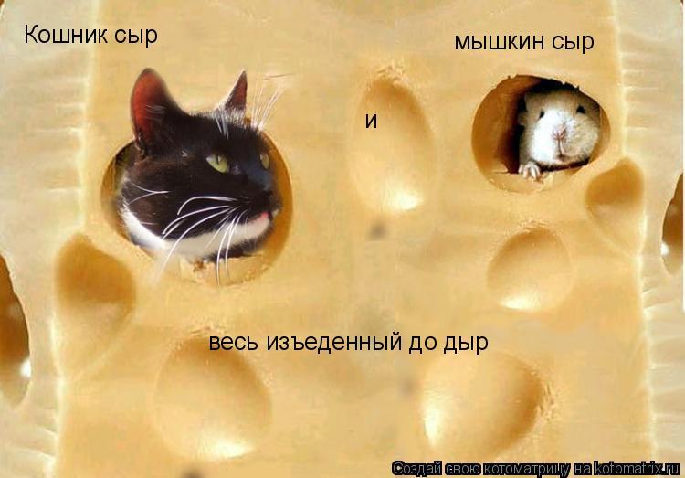 Котоматрица: Кошник сыр и мышкин сыр весь изъеденный до дыр