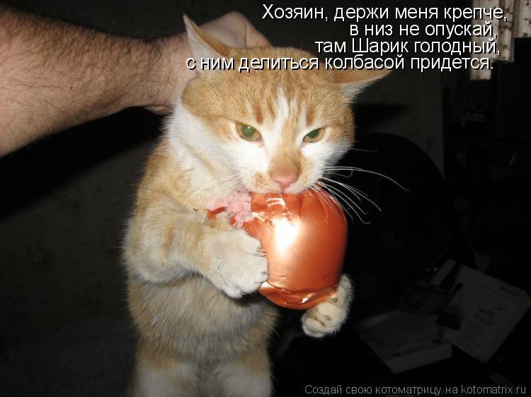 Котоматрица: Хозяин, держи меня крепче, в низ не опускай,  там Шарик голодный, с ним делиться колбасой придется.