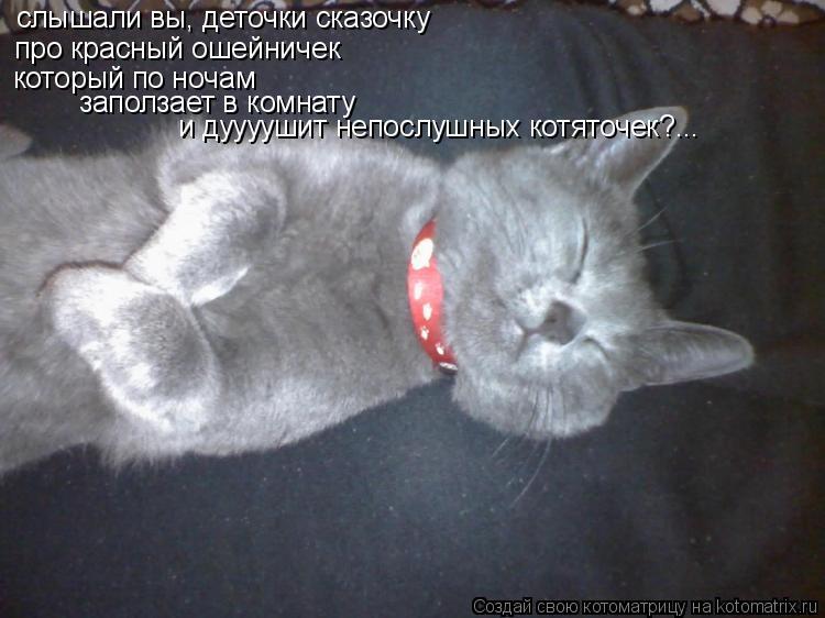 Котоматрица: слышали вы, деточки сказочку про красный ошейничек который по ночам заползает в комнату и дуууушит непослушных котяточек?...