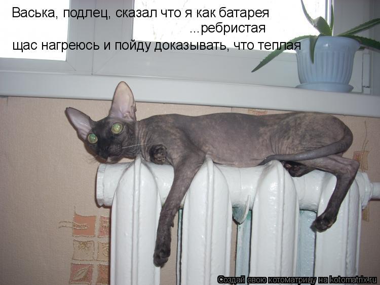 Котоматрица: Васька, подлец, сказал что я как батарея ...ребристая щас нагреюсь и пойду доказывать, что теплая