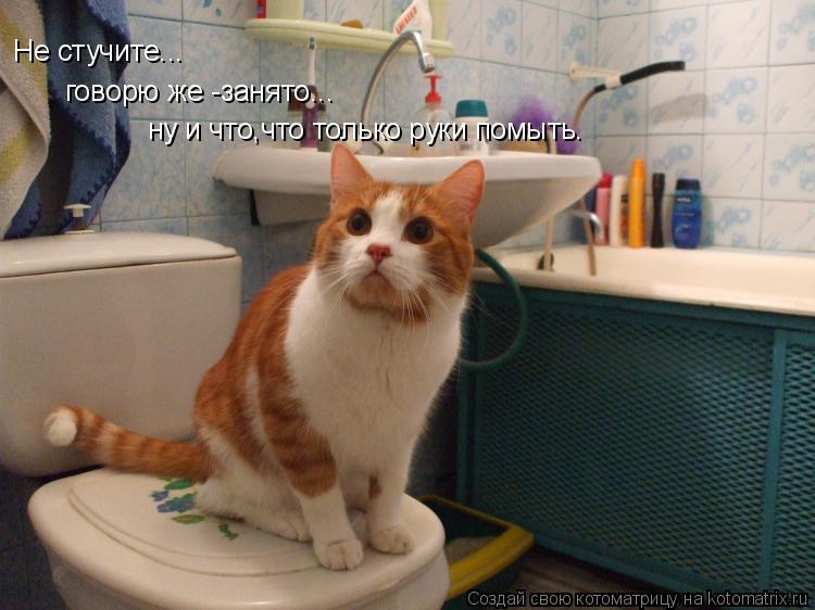 Котоматрица: Не стучите... говорю же -занято... ну и что,что только руки помыть.