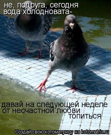 Котоматрица: не, подруга, сегодня вода холодновата- давай на следующей неделе от несчастной любви топиться