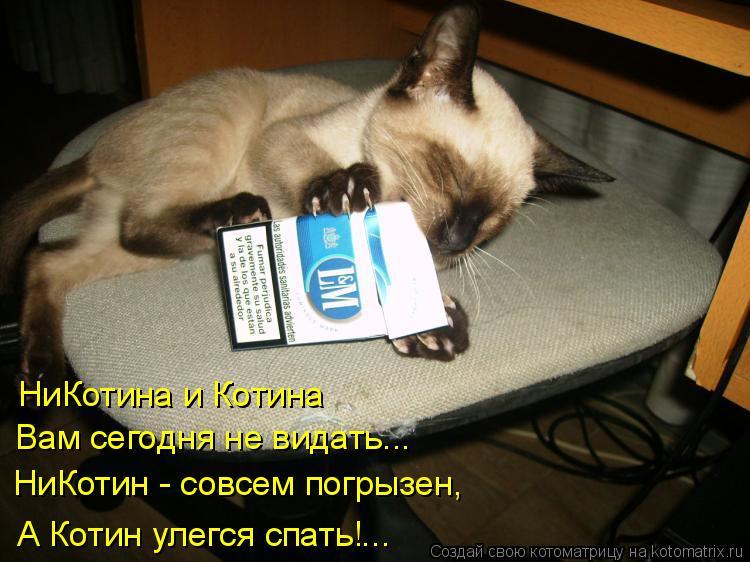 Котоматрица: НиКотина и Котина Вам сегодня не видать... НиКотин - совсем погрызен, А Котин улегся спать!...