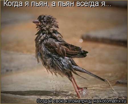 Котоматрица: Когда я пьян, а пьян всегда я...