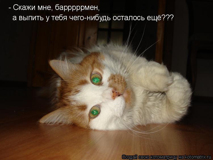 Котоматрица: - Скажи мне, барррррмен, а выпить у тебя чего-нибудь осталось ещё???
