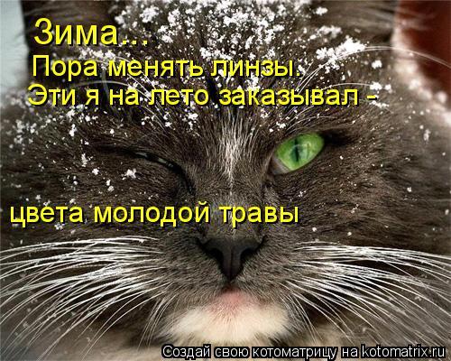 Котоматрица: Зима... Пора менять линзы.  Эти я на лето заказывал - цвета молодой травы