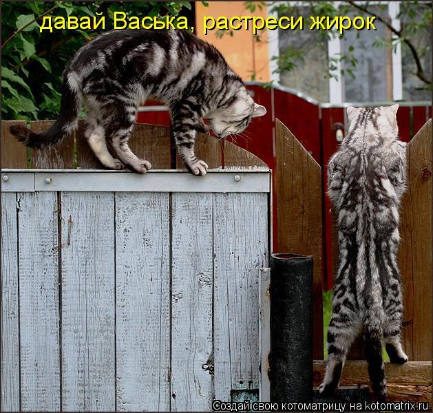 Котоматрица: давай Васька, растреси жирок