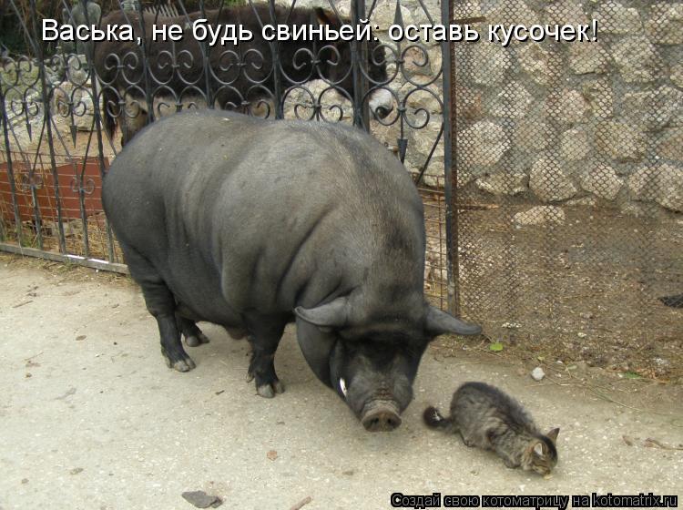 Котоматрица: Васька, не будь свиньей: оставь кусочек!