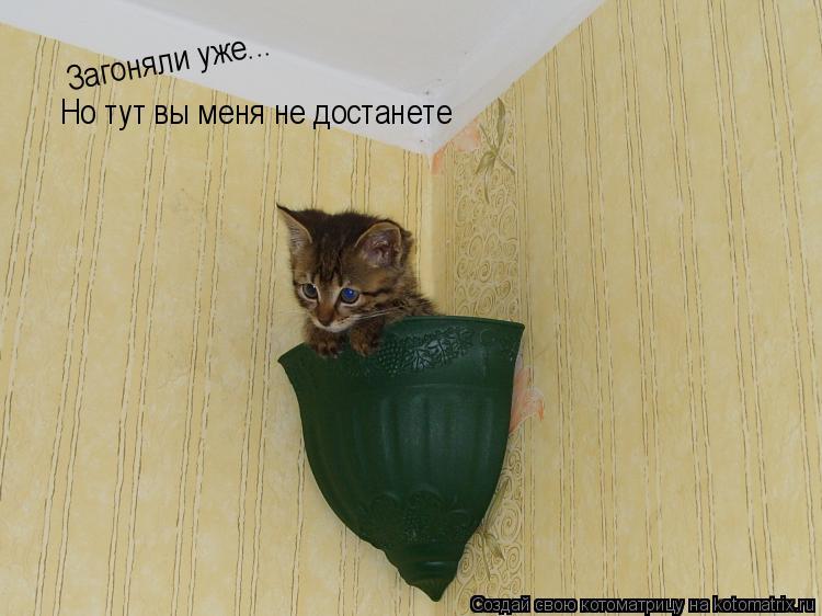 Котоматрица: Но тут вы меня не достанете Загоняли уже...