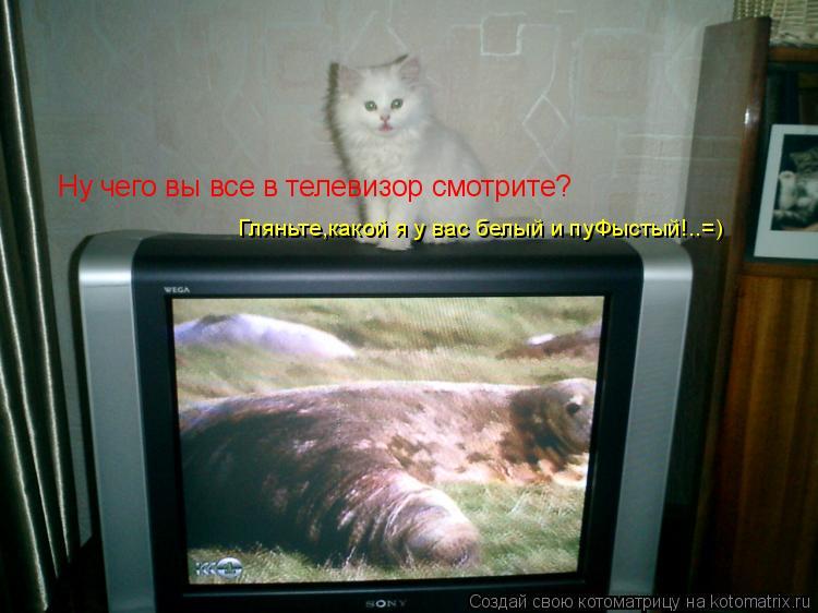 Котоматрица: Ну чего вы все в телевизор смотрите? Гляньте,какой я у вас белый и пуФыстый!..=)